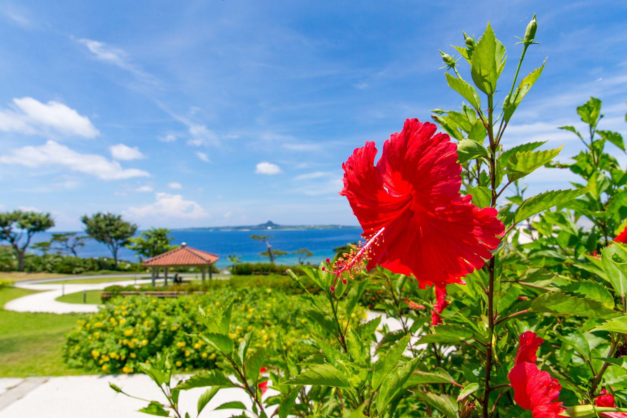 沖縄の風景。わたしたちの失敗